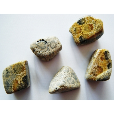 Corail Fossile, roulée - la pièce