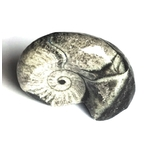 goniatite-polie-du-maroc-petite-fossile-pierre-4cm (1)