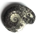 goniatite-polie-du-maroc-petite-fossile-pierre-4cm (4)
