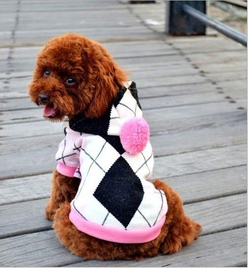 pull pour chien pull pour chien british rose habit pour chien. Black Bedroom Furniture Sets. Home Design Ideas