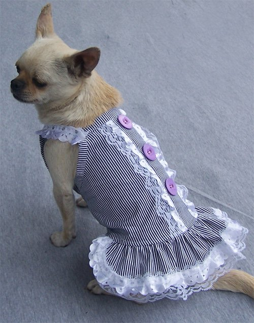 ROBE A BOUTONS POUR CHIEN
