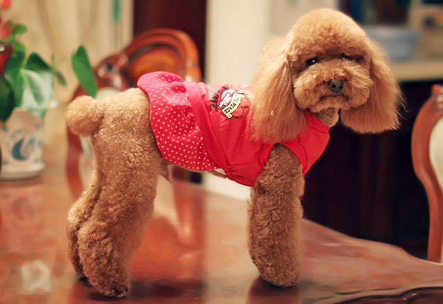 ROBE GIRLY ROUGE POUR CHIEN