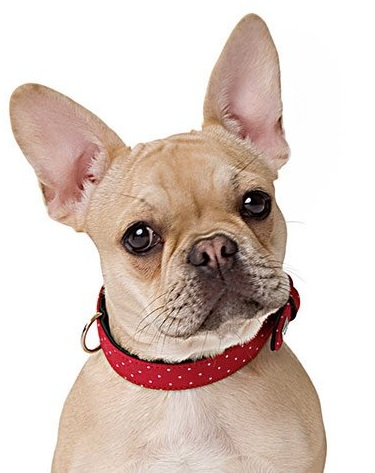 collier et laisse pour chien collier en cuir de boeuf pour chien. Black Bedroom Furniture Sets. Home Design Ideas