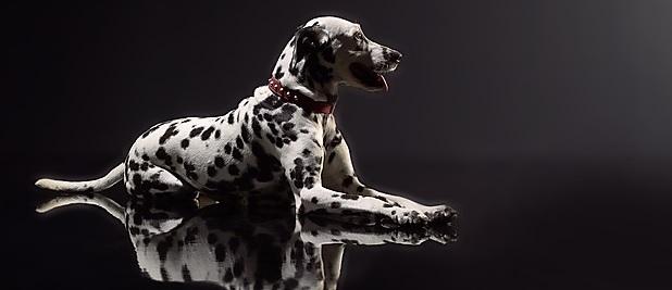 Collier avec rivets pour chien de Taille Moyenne