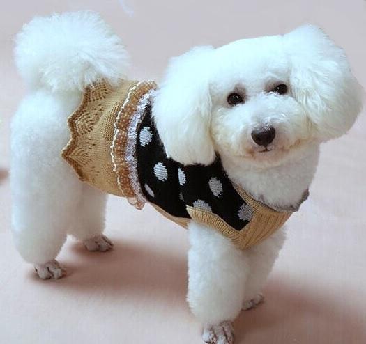 robe pour chien robe en laine pour chien robe petit chien. Black Bedroom Furniture Sets. Home Design Ideas