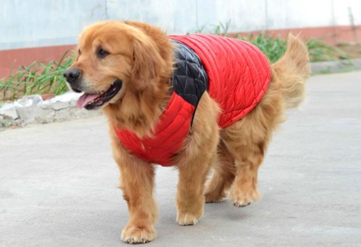 manteau pour grand chien doudoune rouge pour chien. Black Bedroom Furniture Sets. Home Design Ideas