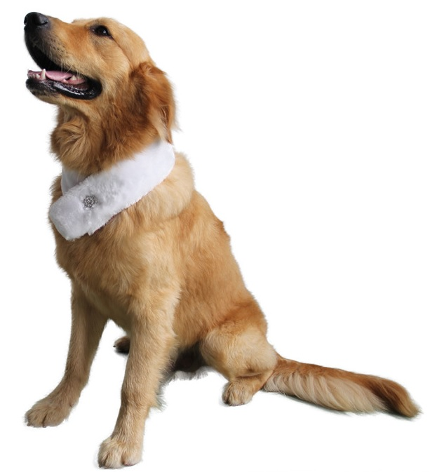 Echarpe pour chien cravate pour chien foulard r versible for Piscine pour grand chien