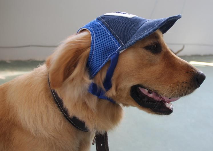 Casquette chien for Piscine pour grand chien