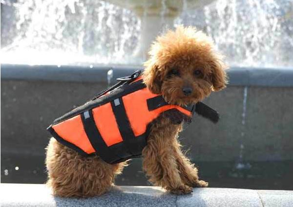 gilet de sauvetage pour chien bou e orange pour chien. Black Bedroom Furniture Sets. Home Design Ideas