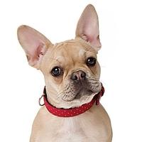 COLLIER LUXE POUR CHIEN collier en cuir pour chien