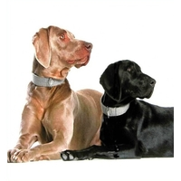 COLLIER LUXE POUR CHIEN collier Hunter pour chien