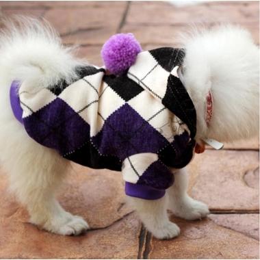 pull-chien-british-1