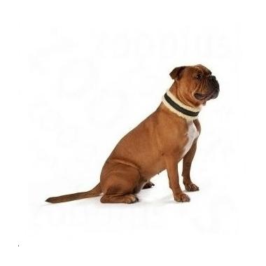 collier pour chien boxer