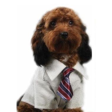 cravate-pour-chien-bleue-raye