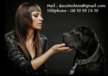 contact ducotechien3