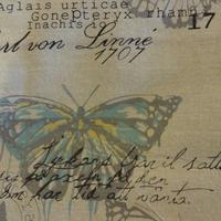 Ramie Coton papillon