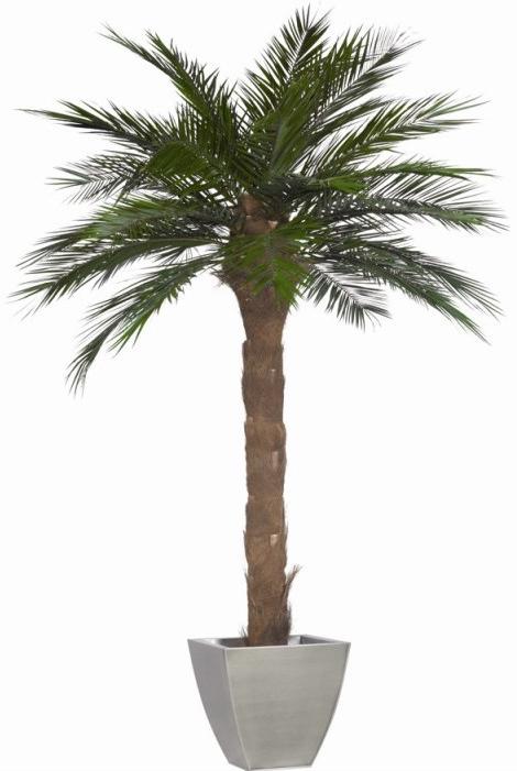 Grand palmier pour bureaux d 39 entreprise - Pot pour palmier ...