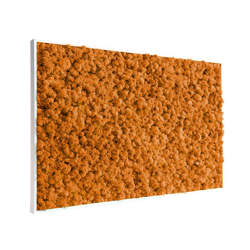 Tableau végétal en lichen orange