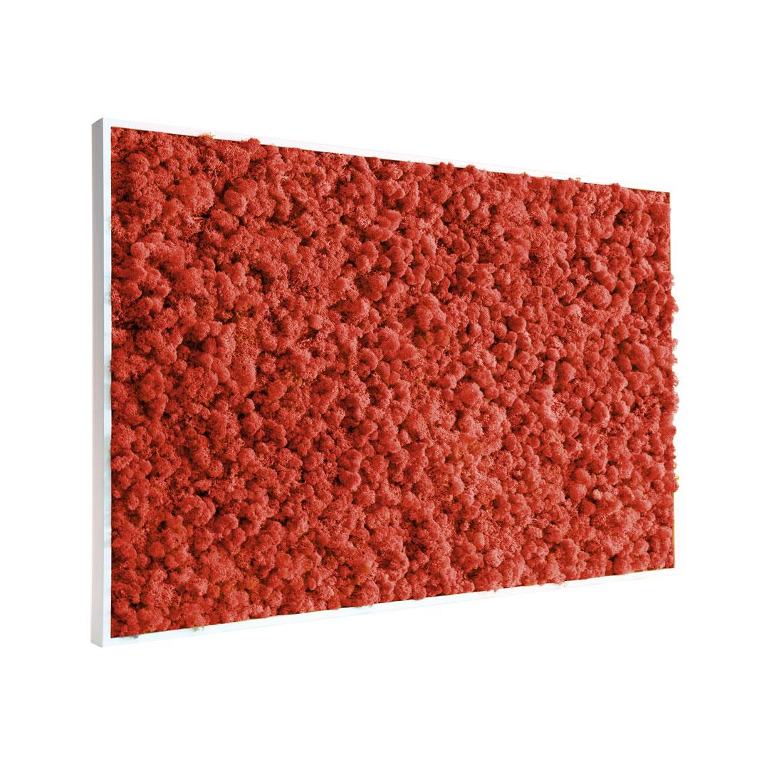 Tableau végétal en lichen rouge
