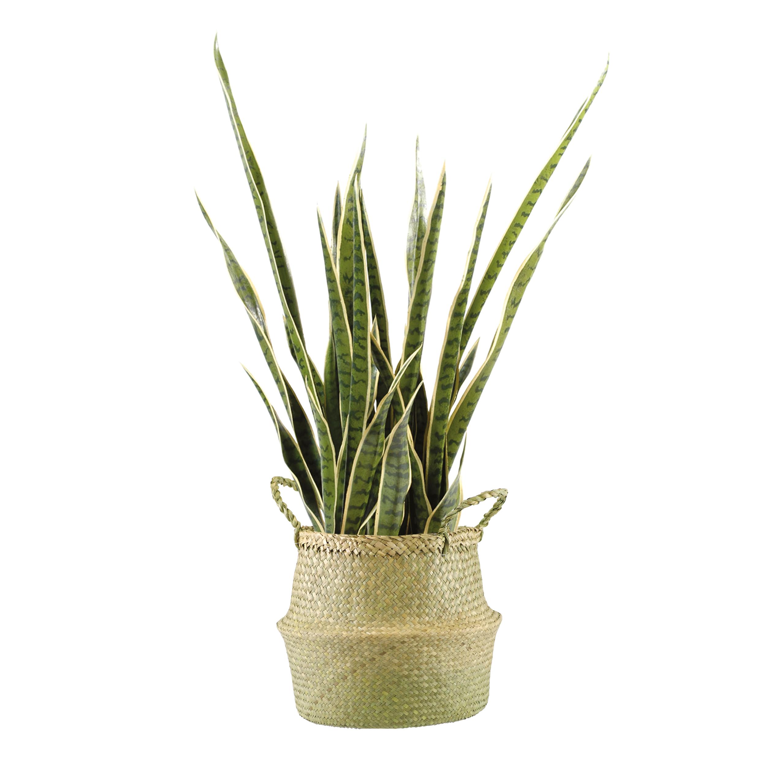 Plante Haute En Pot plante verte de bureau sans entretien et avec pot pour