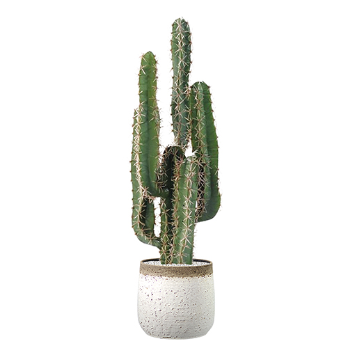 Cactus finger et pot en terre cuite