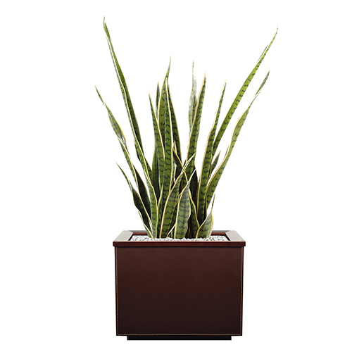 Sanseveria Artificielle et pot en cuir