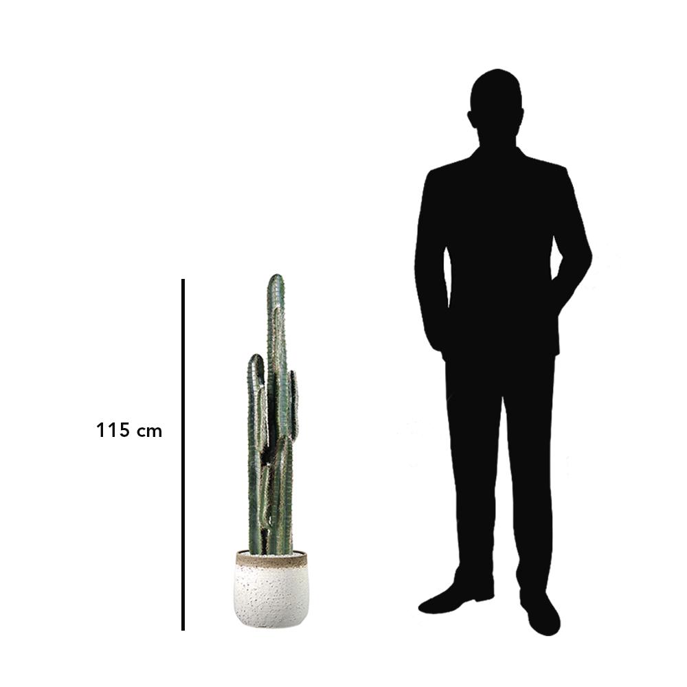 Cactus Cereus et pot en terre cuite