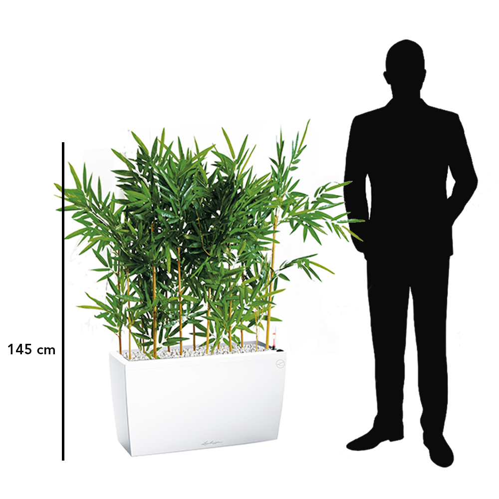 Bambou bac blanc séparateur