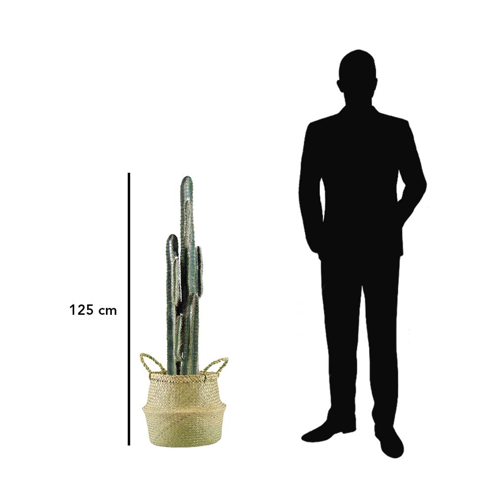Cactus cereus vert avec pot en osier tressé