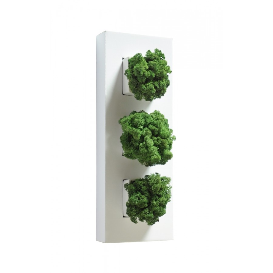 Plantes murales lichen vert nature for Decoration murale plante