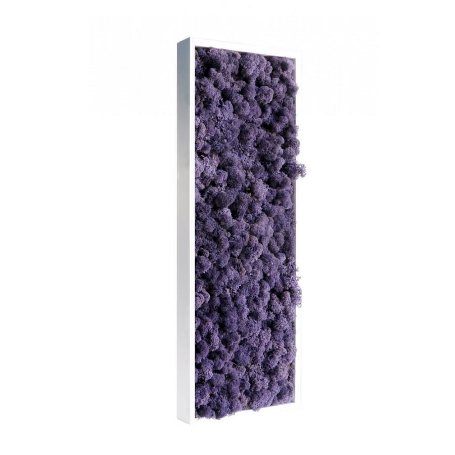 Tableau végétal en lichen violet