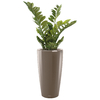 plantes de bureau en pot marron semi naturelle
