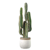 (ChamoteØ20-[Blanc])-(Cactus)