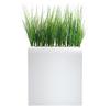 (Roma-Haute-[Blanc])-(Onion-Grass-Haie)