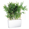 Bambou semi naturel pour bureau bac blanc