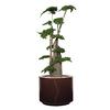 plante stabilisée pour bureau avec pot en cuir rond