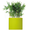 séparateur vert anis de bambou semi naturel