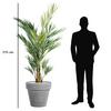 palmier-kentia-215-cm-pot-fumé