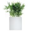 Bambou bac haut blanc séparateur