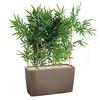 Bambou bac taupe séparateur