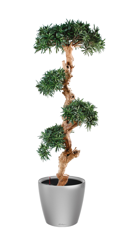 Pin semi naturel 170 cm plantes de bureau for Plante 70 cm