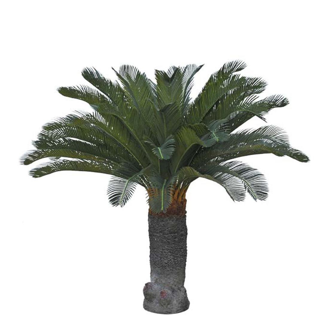 Gotessons_Cycas_Palm