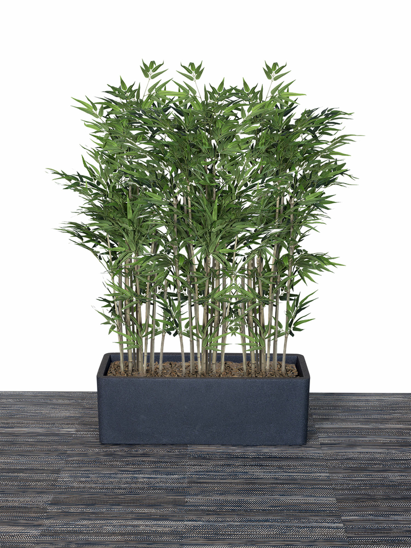 bac-et-bambous