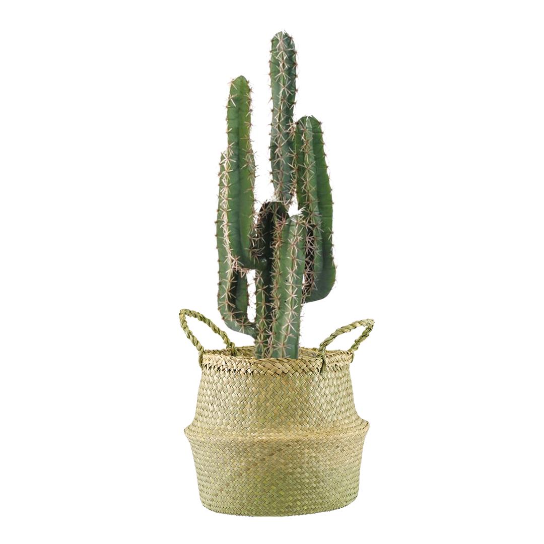 (SeaGrassØ27)-(Cactus)