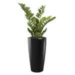 plantes de bureau en pot noir semi naturelle
