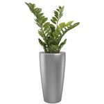 plantes de bureau en pot gris semi naturelle