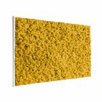 Tableau végétal lichen jaune