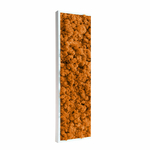 tableau-végétal-en-lichen-orange2