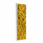 tableau-végétal-en-lichen-jaune2