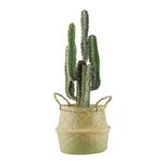 Cactus finger et pot en osier tressé